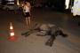 Sıcakta susuz çalıştırılan fayton atı öldü, faytoncu kaçtı