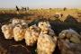 Êzidî işçiler kötü çalışma koşullarında çalıştırılıyor