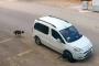 Antalya'da sürücü, köpeği bilerek ezip kaçtı