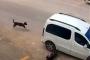 Köpeği ezen kişiye sadece trafik güvenliğinden işlem yapıldı