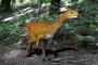 Bilim insanları: Dinozor evriminin kayıp halkası bulundu
