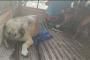 AÜ'de köpeklere antidepresan verildi iddiası