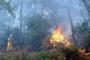 Fethiye'de orman yangını kontrol altına alındı
