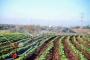 'Tarım politikası üreteni kaçırmak üzere kurgulanmış'