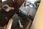 Harvey Kasırgası sırasında 3 metrelik timsah eve sığındı