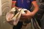 Tuvalet deliğine düşen yavru kedi AFAD tarafından kurtarıldı