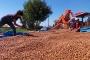 Fındık üreticileri taban fiyatın yükseltilmesini istiyor