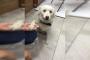 Köpeğe tekme attığı için gözaltına alınan kişi serbest