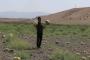 Muş Ovası'ndaki kuraklık üreticileri vurdu