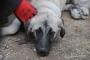 Antep'te iki kişi köpeğe işkence yaptı