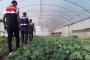 'Organik esrar' yetiştirirken gözaltına alındılar