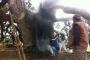 Dilek dilemek için yaktığı mum, 800 yıllık ağacı yaktı
