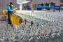 'Daralıyoruz' diye işçi atan Şişecam 240 milyona fırın açtı
