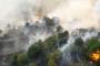 Milas'ta tarım arazisindeki yangın ormana sıçradı