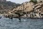 Latmos'da taş ocağınının kapasite artırımı istemine tepki