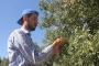 KHK ile ihraç edilen memur ailesinin zeytinliğinde çalışıyor