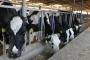 İthal et politikasına kasap ve üreticilerden tepki