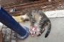 Ayakları bağlanan kedi işkenceyle öldürüldü