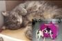 Kedi 'Duman', 38 kedi evine ilham kaynağı oldu