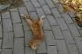 Kaldırımda kafası kesilmiş kedi bulundu