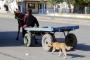 At arabasıyla köpeğe eziyet