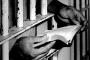 Cezaevlerindeki kitap yasaklarına tepki
